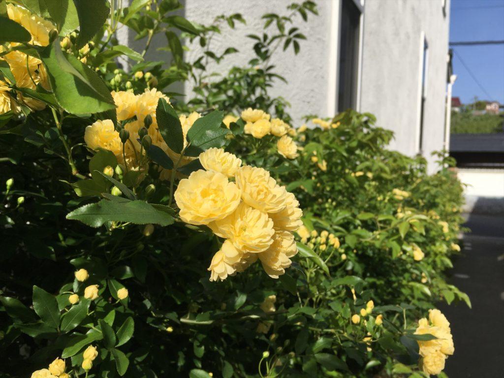 荻浦ガーデンサバーブの春の花
